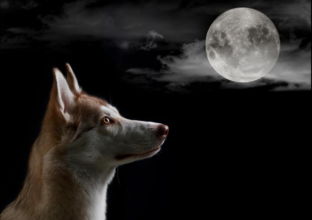 Почему собаки воют на луну?.Вокруг Света. Украина