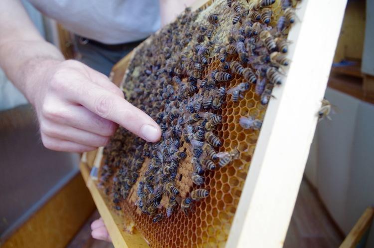 В столице Словении пчел разводят на крышах
