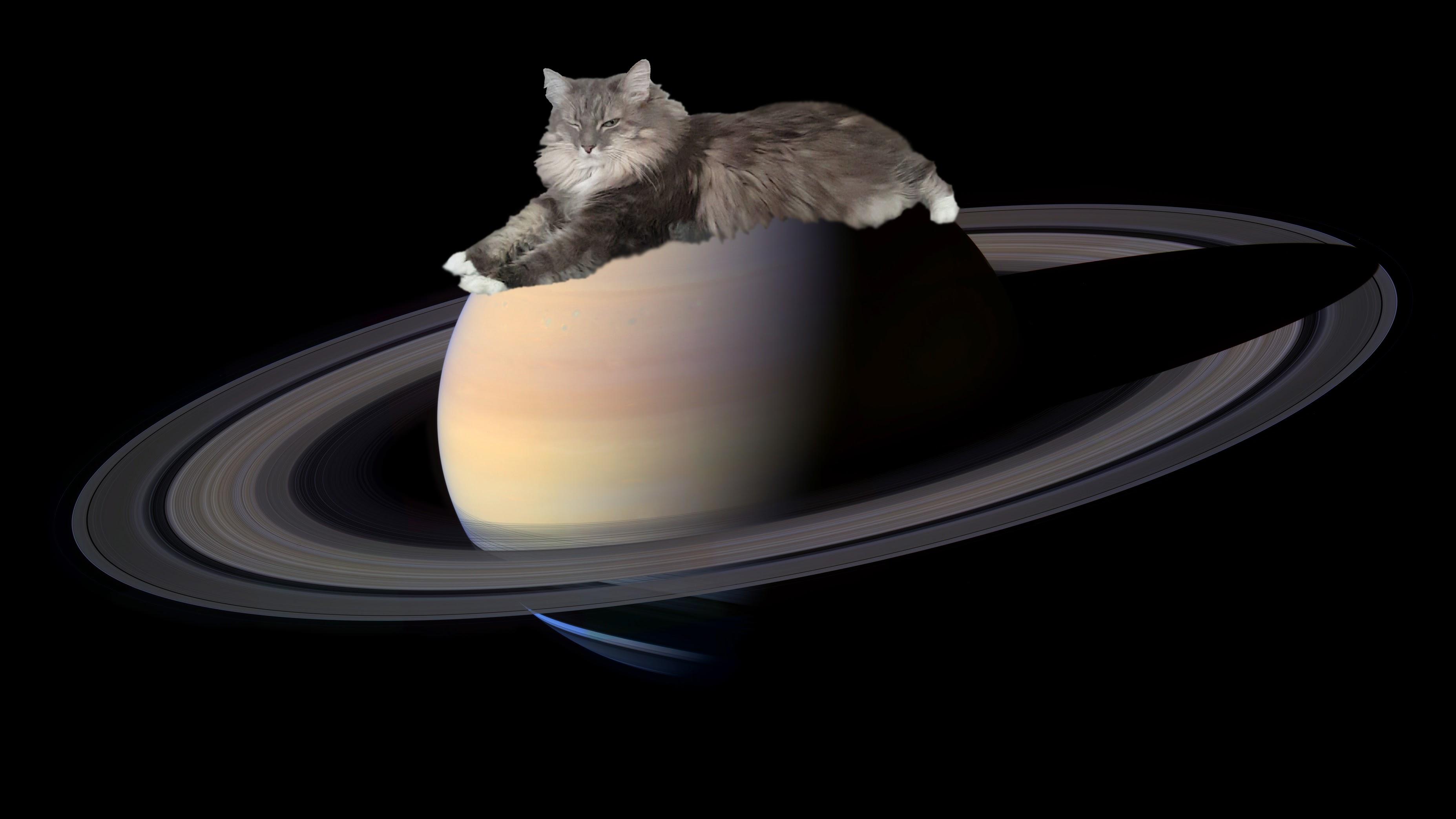 Космические котята: что