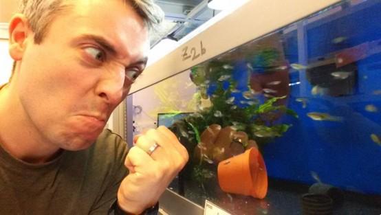 Биологи месяц пугали рыбок, чтобы разбудить в них личность