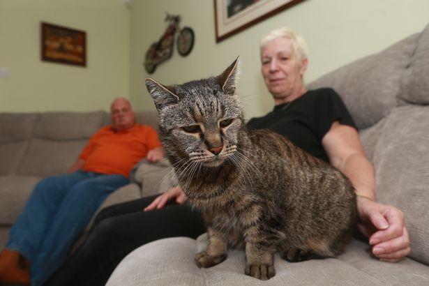 Умер самый старый кот на планете