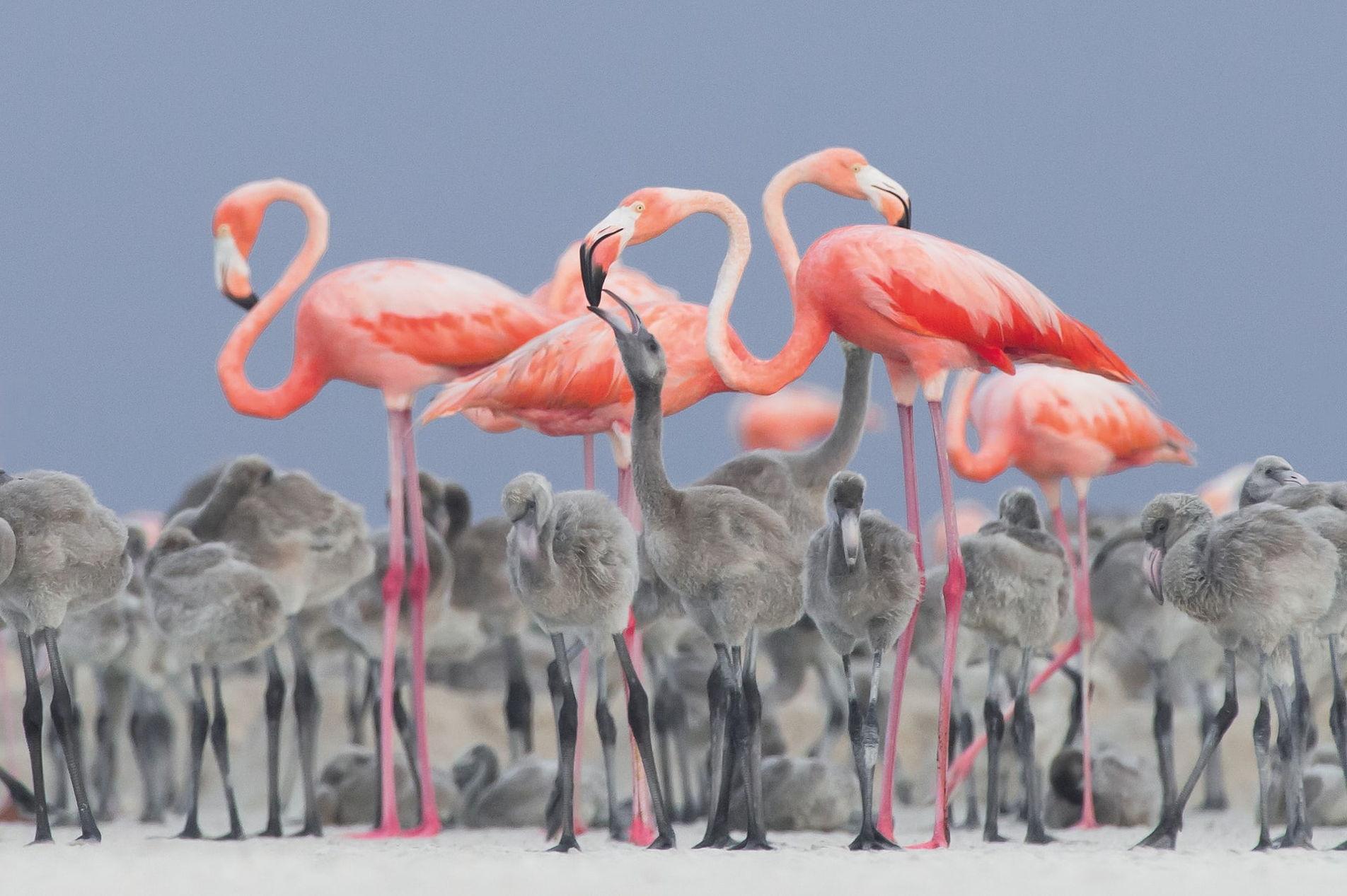 Фотограф, подсматривающий за фламинго, победил в международном конкурсе