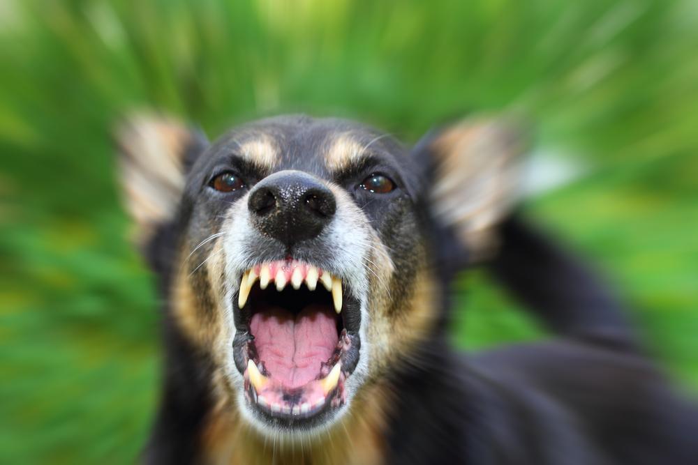 В Греции дикие собаки растерзали туристку