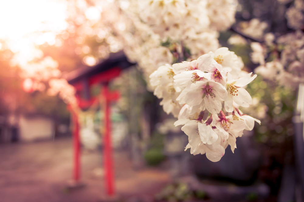 Ваби-саби: секрет счастья по-японски