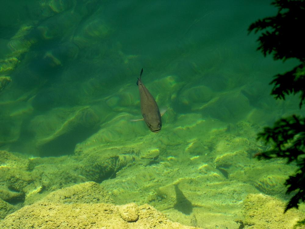 В мозгу ниагарских рыб обнаружены антидепрессанты