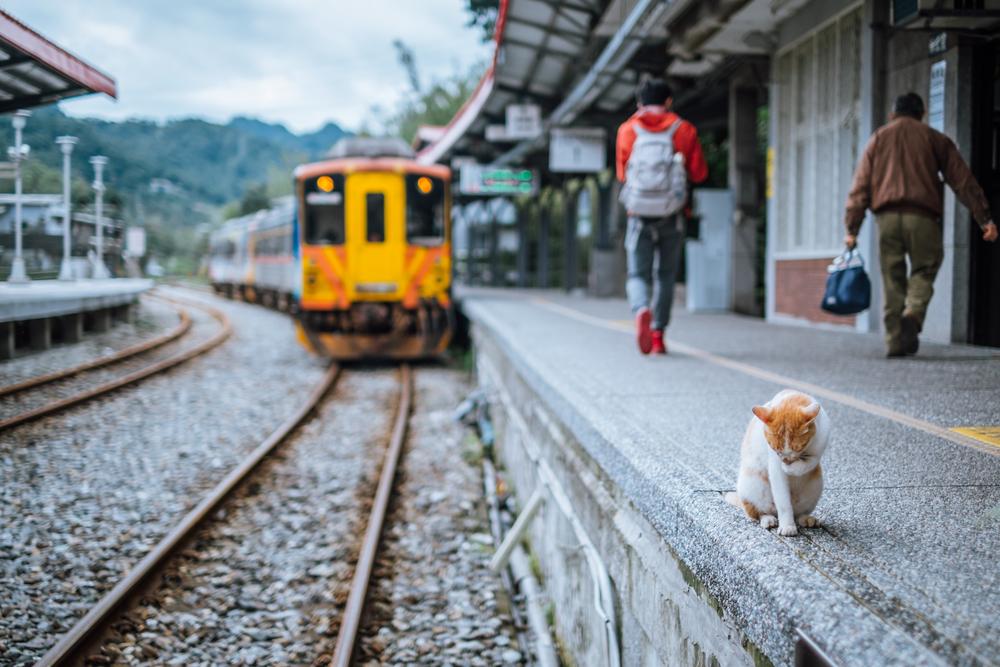 В Японии на поезде прокатили бездомных котов