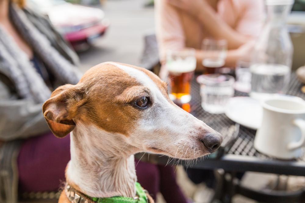 В Америке проводят  гастрономические туры для собак