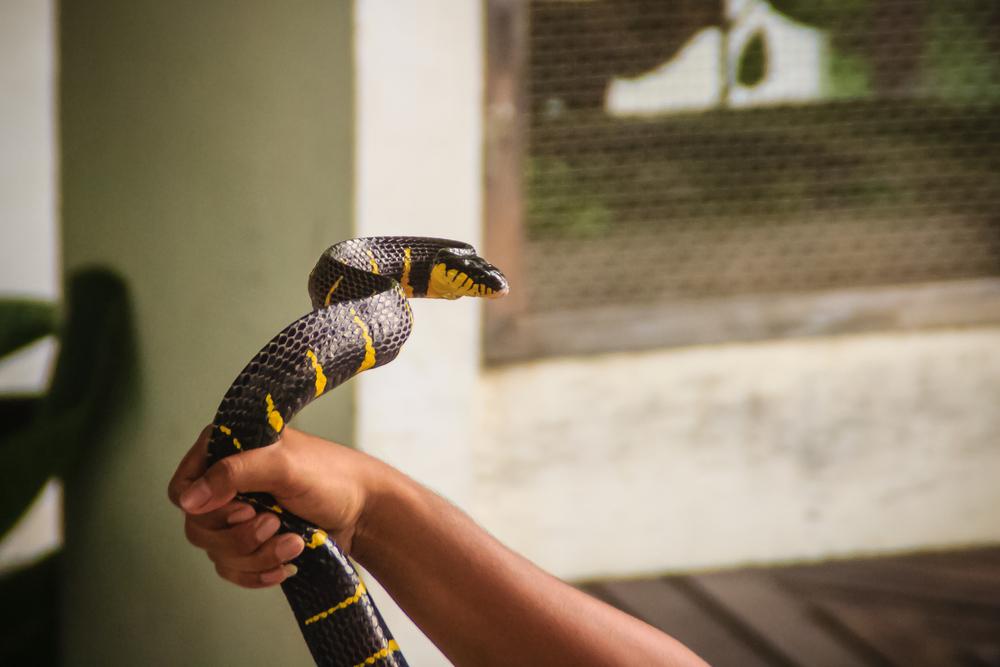 Австралийский змеелов показал, как достать змею из унитаза