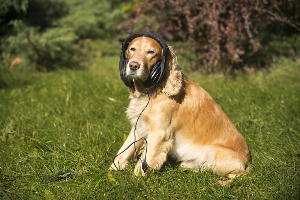 В России собакам запретили лаять по выходным и в праздники