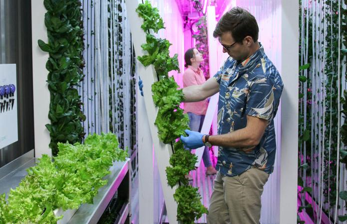 Ученые из Бостона изобрели мини-фермы, способные противостоять ураганам