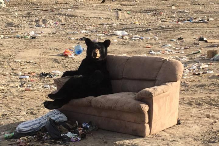 Медведи тоже люди