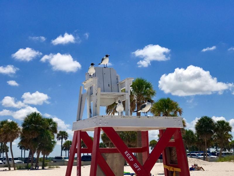 Дневник влюбленной во Флориду: пляжи, парки, транспорт и природа штата