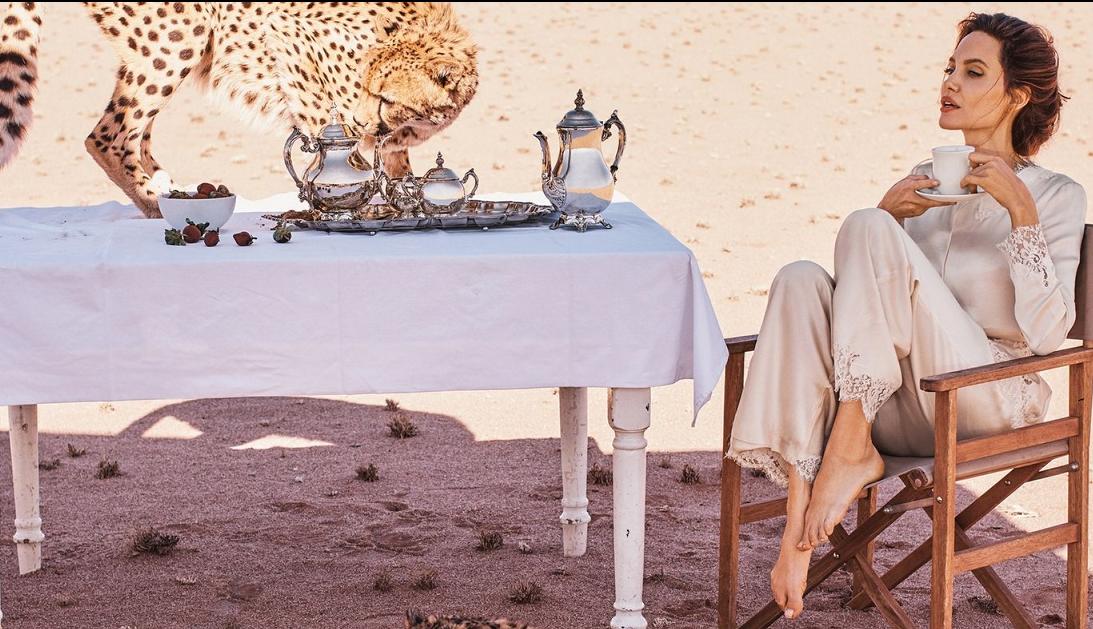 Анжелина Джоли позавтракала с гепардами в Намибии