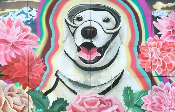 Мексиканскую собаку-спасателя поблагодарили граффити