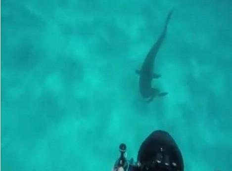 Оператор-водолаз снял атаковавшую его тигровую акулу