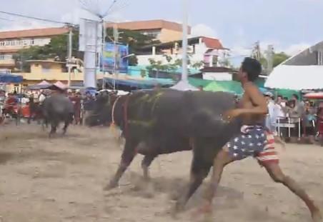 В Таиланде прошли гонки на буйволах