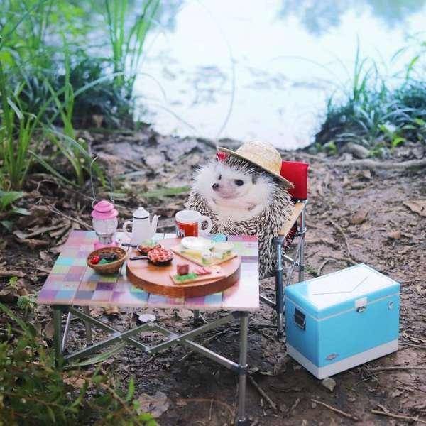 Ежик сходил на пикник и выложил фотоотчет в Instagram
