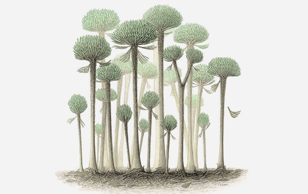 Ученые нашли останки гигантских деревьев-грибов