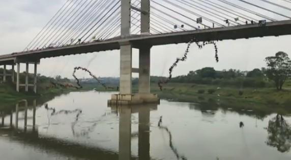 В Бразилии 245 человек одновременно бросились с моста