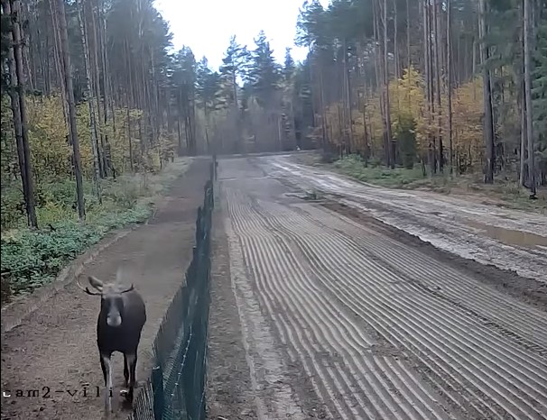 Пограничники показали, как нелегально перебраться из Беларуси в Литву