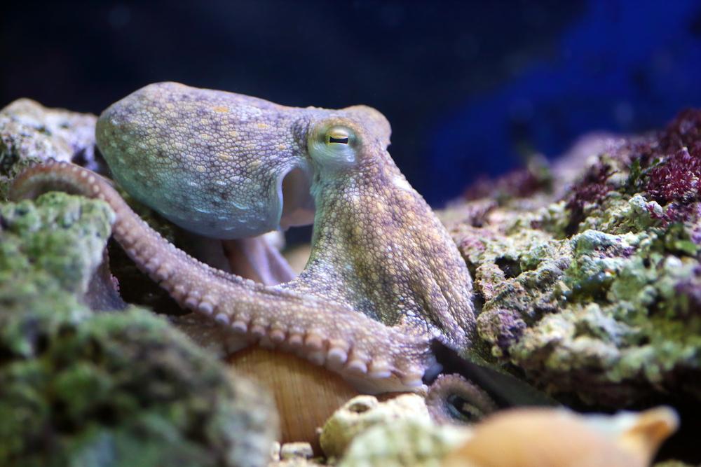 День осьминога: 10 невероятных фактов о морском животном с присосками.Вокруг Света. Украина