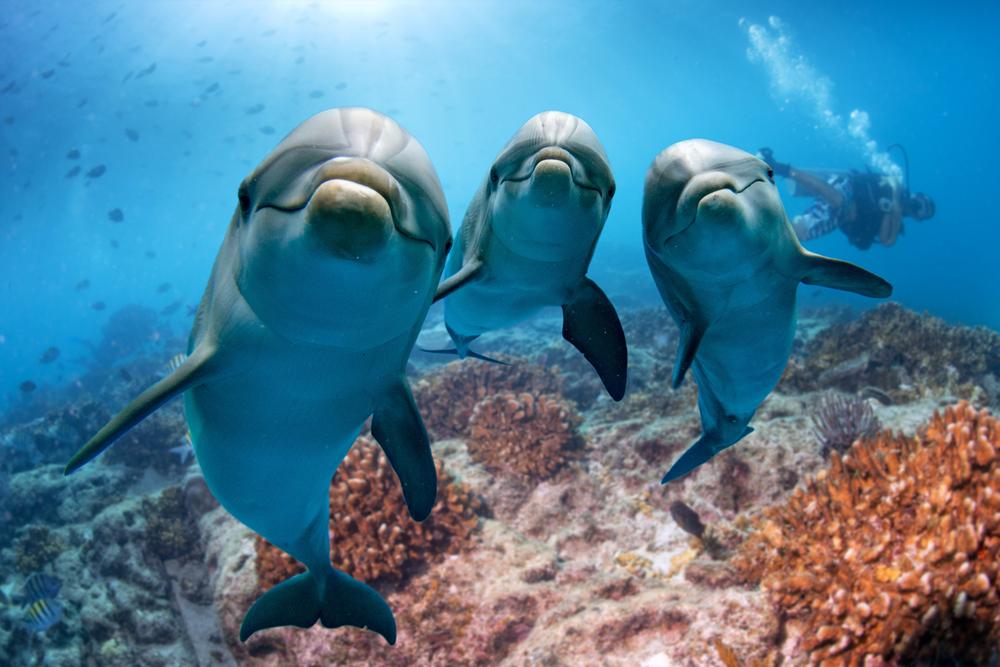 Дельфины vs. человек: кто умнее?.Вокруг Света. Украина