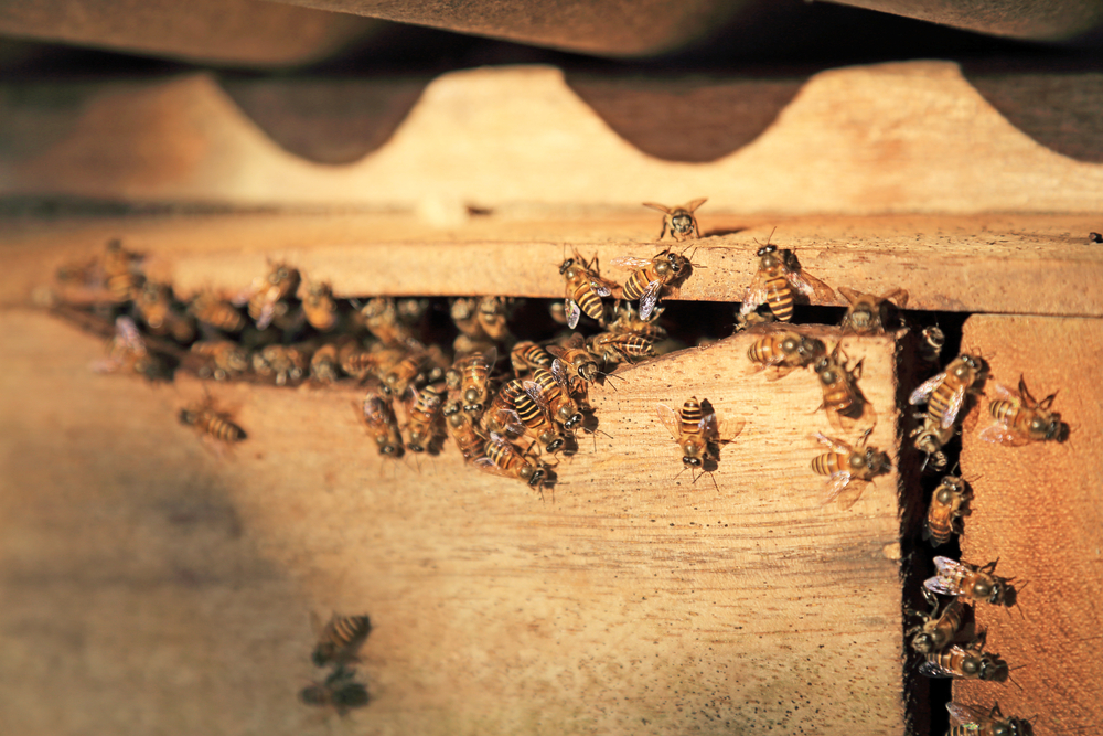 Во всем мире мед отравлен инсектицидами.Вокруг Света. Украина