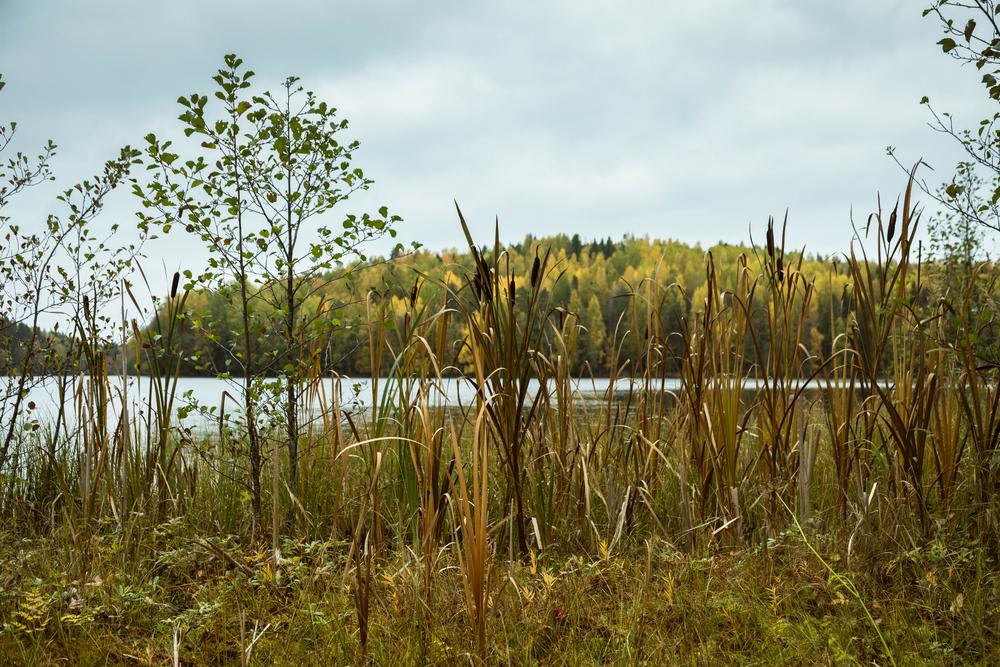 Сиваш, Синевир, Амазонія: 7 дивних фактів про світові водно-болотяні угіддя