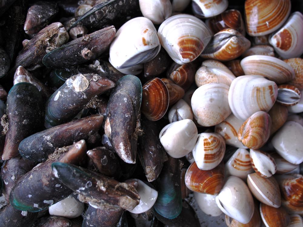 Моллюски и черви провоцируют глобальное потепление