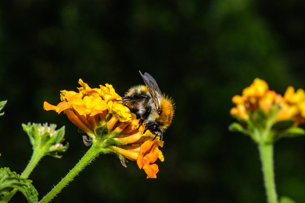 Ученые сообщили о катастрофическом сокращении насекомых
