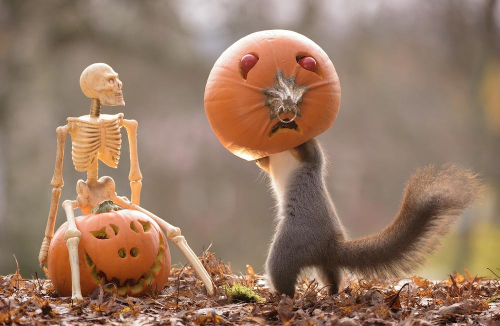 Зверский Хэллоуин: 7 самых страшных животных на Земле
