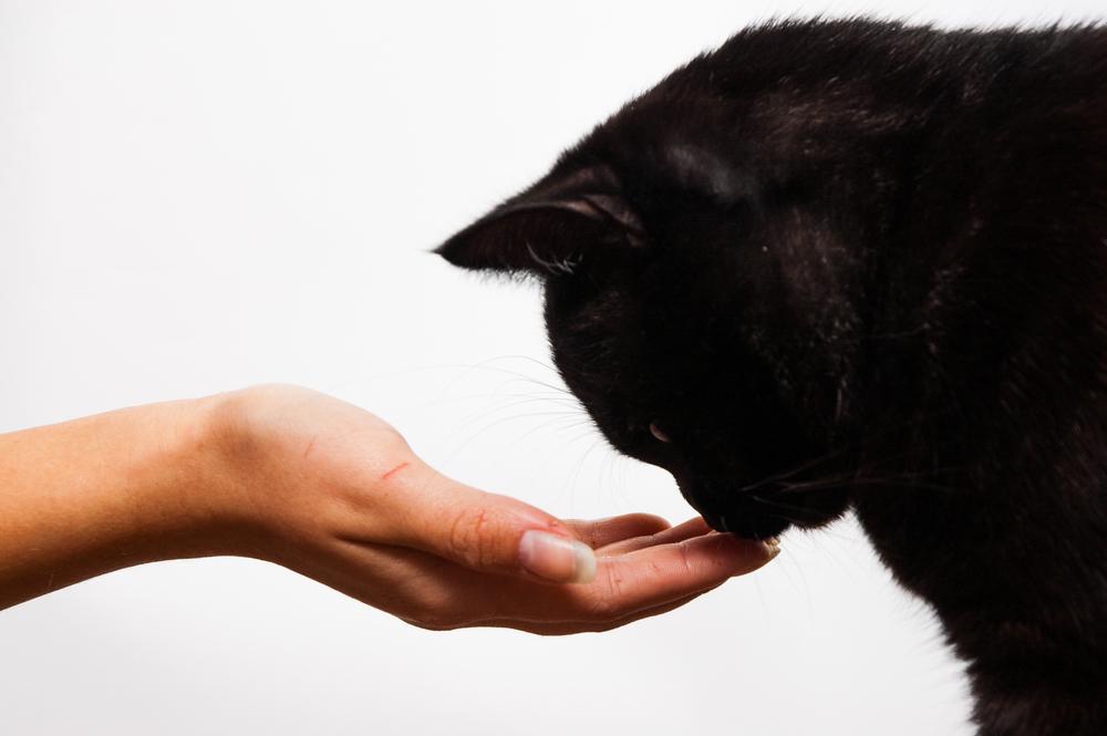 Что стоит за черной кошкой: ТОП-10 суеверий и их истоки