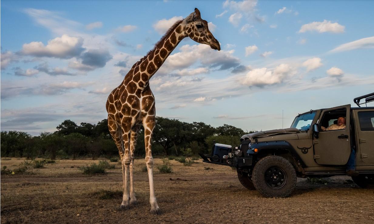 Страх и красота в Техасе: в США созданы ранчо для охоты на экзотических животных