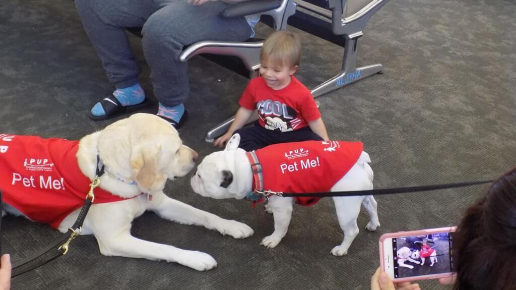 В аэропорту Лос-Анджелеса нервных пассажиров успокаивают с помощью собак