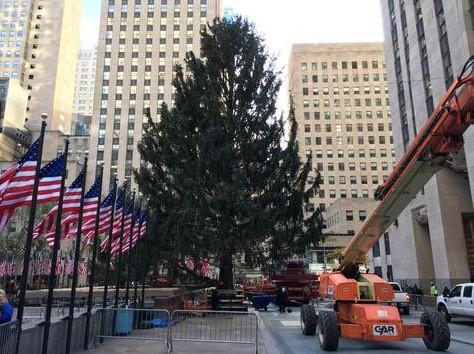 Как выглядит главная рождественская елка в Нью-Йорке
