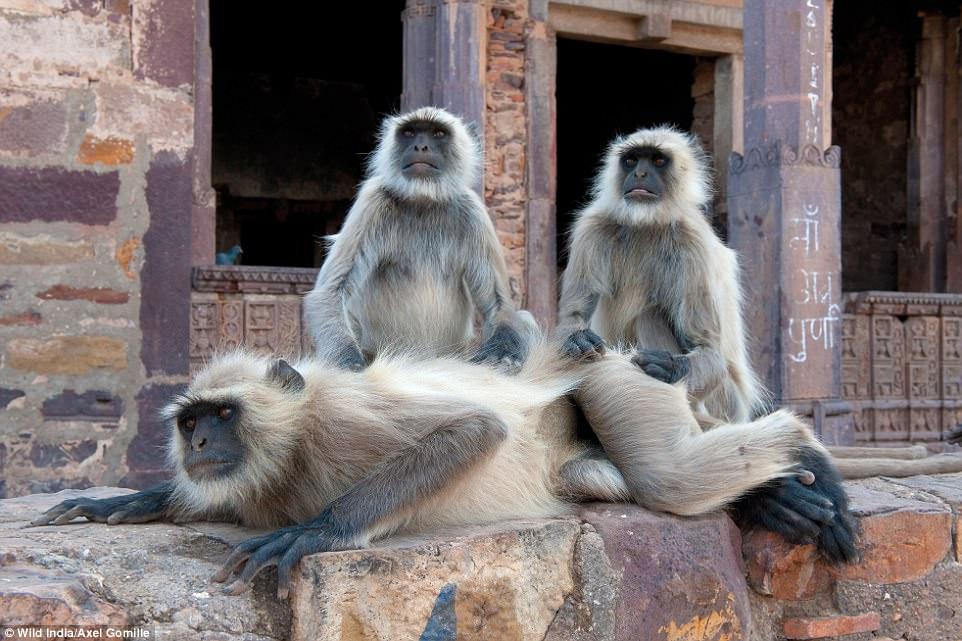 Книга джунглей: немецкий фотограф 25 лет снимает неприрученную Индию