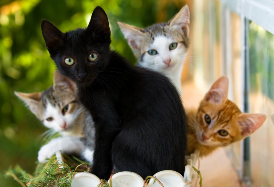 День черных кошек в Италии