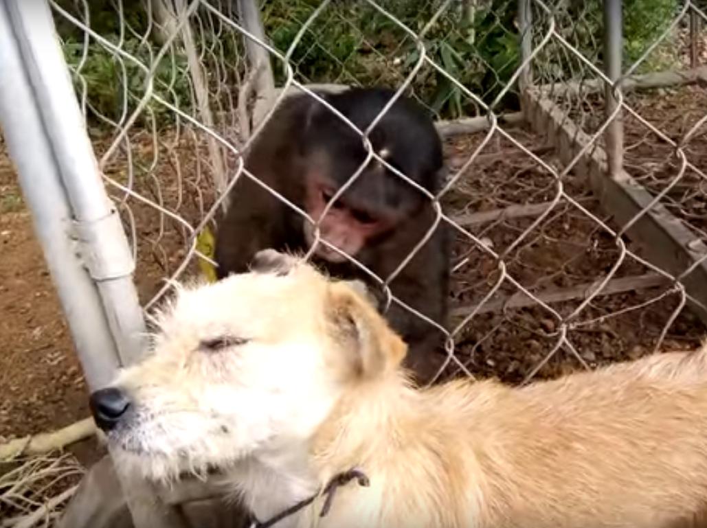 Заботливая обезьяна & лохматый пес: сила инстинкта
