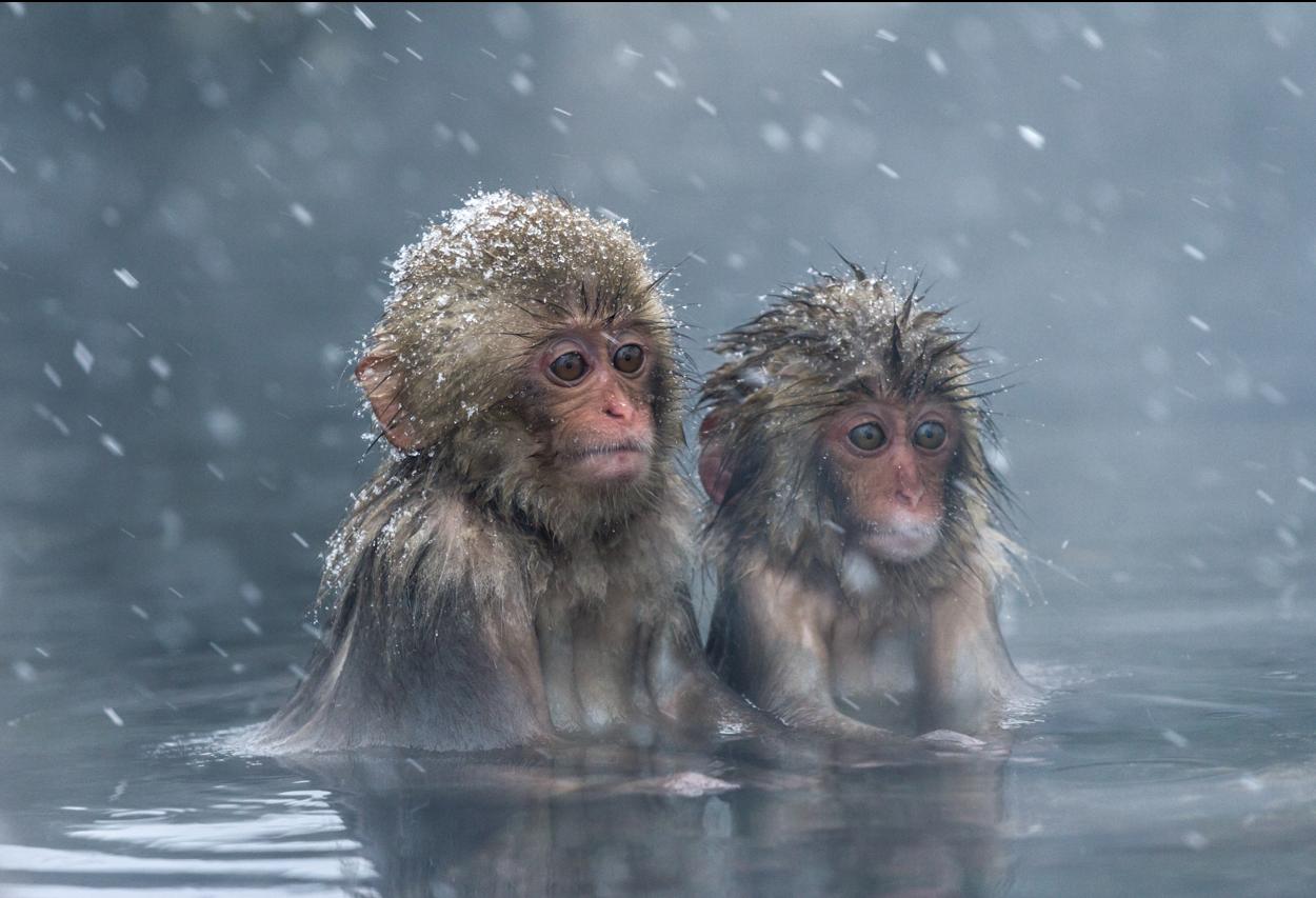 Бани и сауны в разных странах: в какой лучше спасаться от зимы?.Вокруг Света. Украина