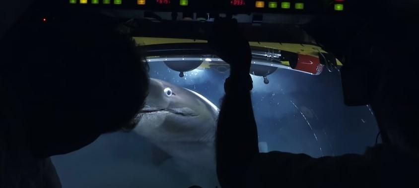 Команда ВВС поспорила с акулами за мертвого кита (видео).Вокруг Света. Украина