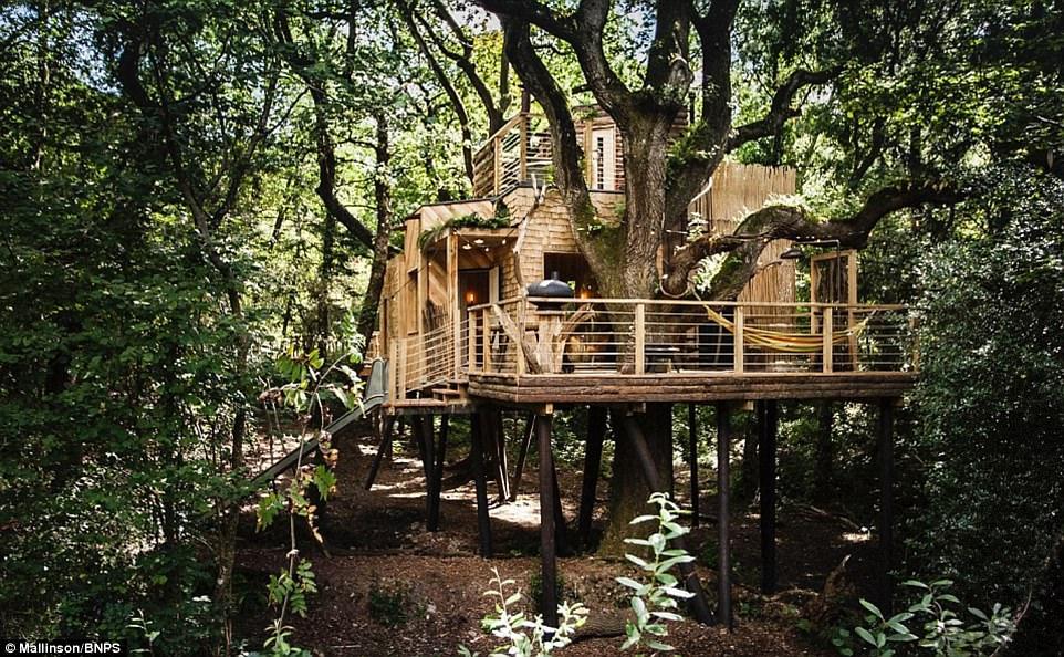 Домик-люкс на дереве претендует на премию по архитектуре