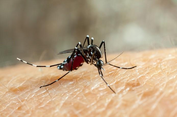Зоозащитница окаменела после укуса комара на Суматре.Вокруг Света. Украина