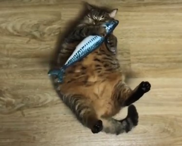 Толстый кот ловит резиновую рыбу