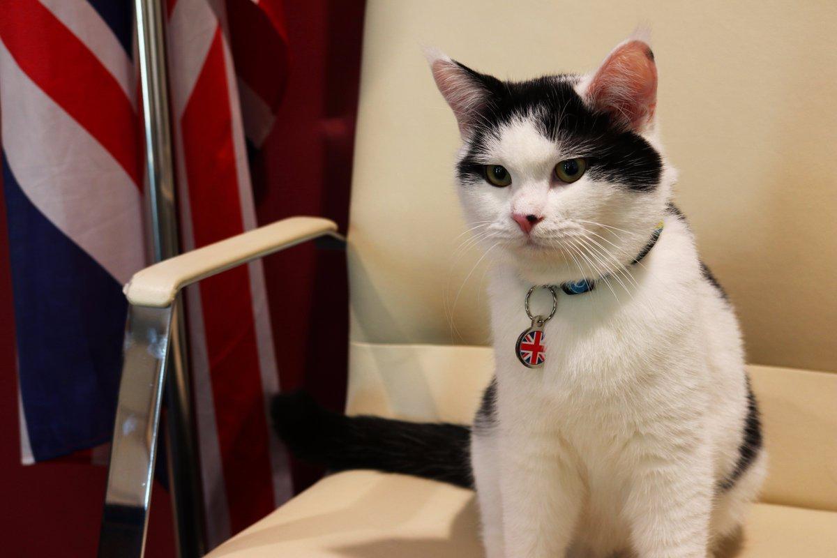 Британское посольство в Иордании зачислило в штат кота