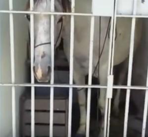 В Бразилии посадили в тюрьму лошадь