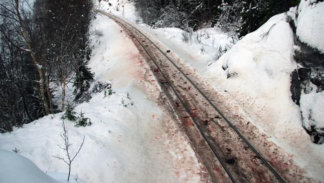 В Норвегии под колесами поездов массово гибнут северные олени