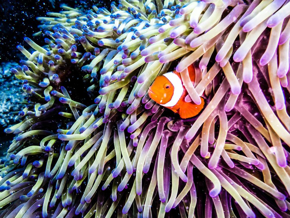 Спасение Большого Барьерного рифа: нужна пересадка