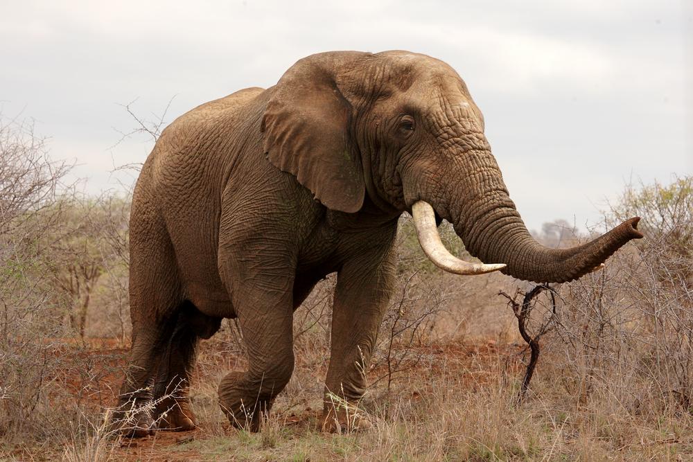 В Замбии слон убил двух туристов из Европы