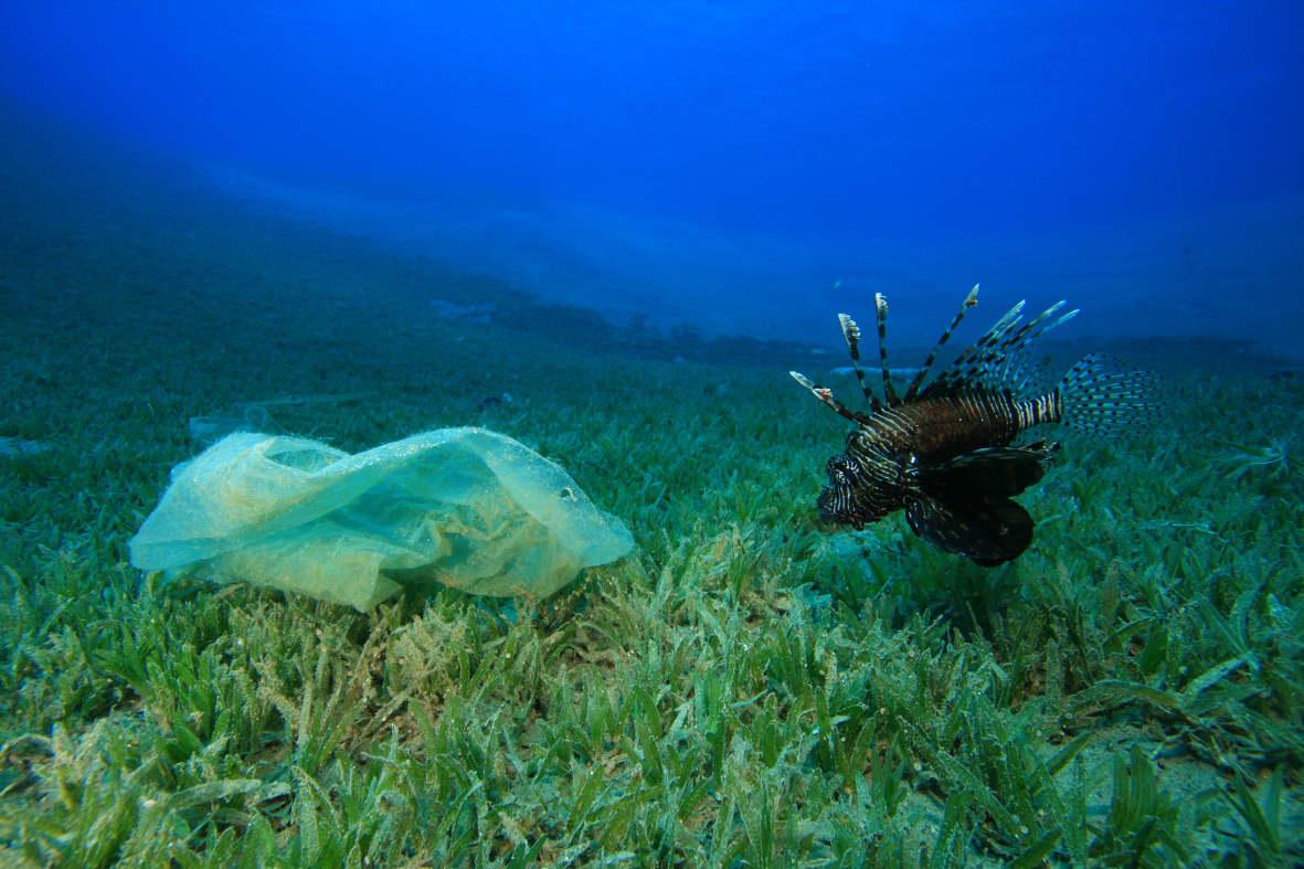 Обитатели океанских глубин питаются пластмассой