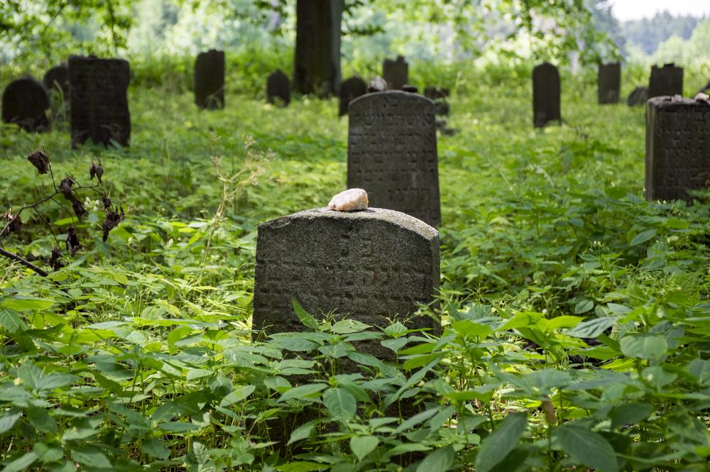 Ученые предлагают хоронить без гробов, чтобы спасти природу